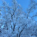 IMG 5035.JPGкопия 150x150 Зима на плато Лаго Наки