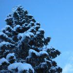 IMG 5037.JPGкопия 150x150 Зима на плато Лаго Наки