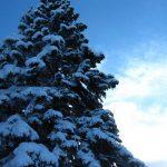 IMG 5039.JPGкопия 150x150 Зима на плато Лаго Наки
