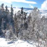IMG 5064.JPGкопия 150x150 Зима на плато Лаго Наки