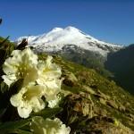 0 7d04b 464bc8bb XL 150x150 Горные цветы Кавказского заповедника