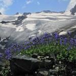 0 80129 575891b2 XL 150x150 Горные цветы Кавказского заповедника