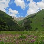 0 8040c 80139d67 XL 150x150 Горные цветы Кавказского заповедника