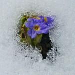 0 81388 5bacdde9 XL 150x150 Горные цветы Кавказского заповедника