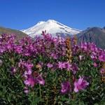 0 89dae f83e8df6 XL 150x150 Горные цветы Кавказского заповедника