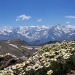 0 90395 77bee3ca XL 150x150 Горные цветы Кавказского заповедника