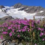 0 913a1 1faf4dca XL 150x150 Горные цветы Кавказского заповедника