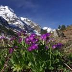 0 91df1 88008a31 XL 150x150 Горные цветы Кавказского заповедника