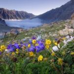 0 9b1de 6b52729f XL 150x150 Горные цветы Кавказского заповедника