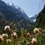 11658279 150x150 Горные цветы Кавказского заповедника