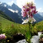 11658377 150x150 Горные цветы Кавказского заповедника