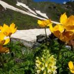 11658386 150x150 Горные цветы Кавказского заповедника