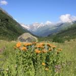 11658826 150x150 Горные цветы Кавказского заповедника