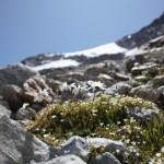 11658880 150x150 Горные цветы Кавказского заповедника