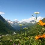 11658982 150x150 Горные цветы Кавказского заповедника