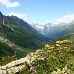 11659014 150x150 Горные цветы Кавказского заповедника