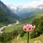 11659026 150x150 Горные цветы Кавказского заповедника