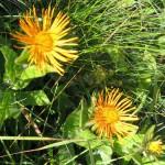 27478835 flower69 150x150 Горные цветы Кавказского заповедника