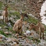 43172956 150x150 Животные Кавказского заповедника