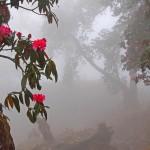 4341433 large 150x150 Горные цветы Кавказского заповедника