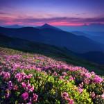 4516703 large 150x150 Горные цветы Кавказского заповедника