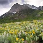 79707003 large 1268918594 12 150x150 Горные цветы Кавказского заповедника