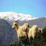 97324523 150x150 Животные Кавказского заповедника