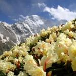 99521609 4263709 large 150x150 Горные цветы Кавказского заповедника