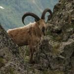 IMG 5704 150x150 Животные Кавказского заповедника