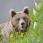 aper213200078m 150x150 Животные Кавказского заповедника