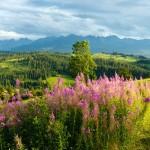 g 14 150x150 Горные цветы Кавказского заповедника