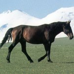kabard 150x150 Животные Кавказского заповедника