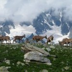 kavk tur 200x150 150x150 Животные Кавказского заповедника