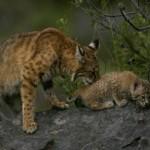 mini 6 150x150 Животные Кавказского заповедника