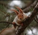 photo 150x137 Животные Кавказского заповедника