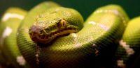Ох уж эти змеи…