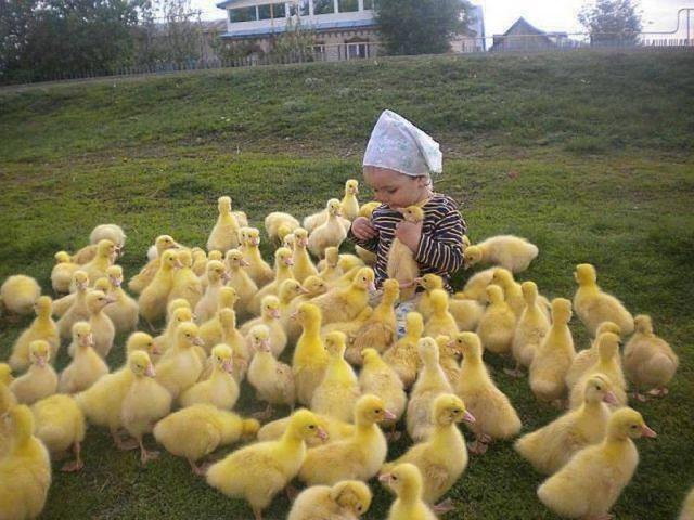 birdday26 640x480 Птицы и дети