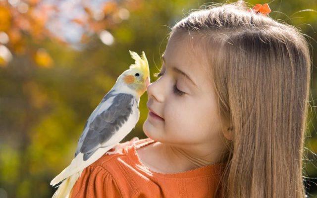 birdday58 640x400 Птицы и дети