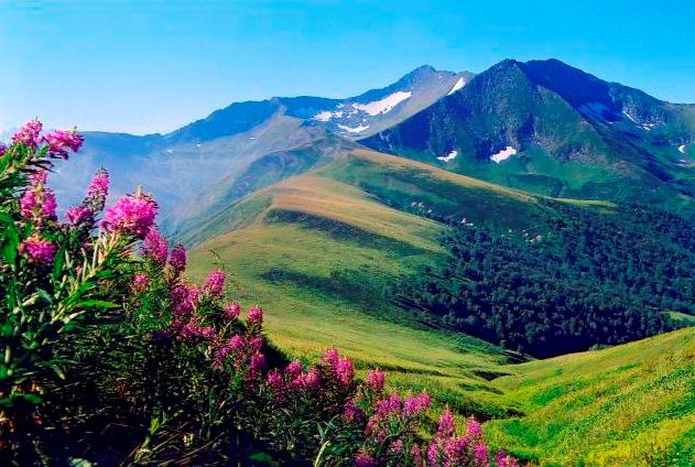 kav Кавказский заповедник   уникальная территория